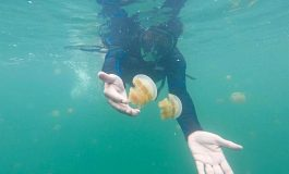Off The Beat: Swimming with jellyfishes on Kakaban Island